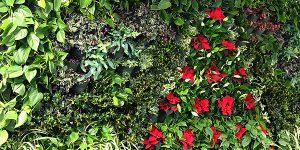 Zielona ściana naszego autorstwa zdobi recepcję na Poleczki 23